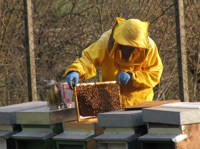 Apicoltura: aggiornata tabella acaricidi consentiti per il controllo della varroatosi delle api
