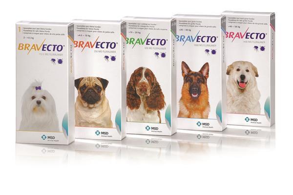 EMA dichiara sicuro il medicinale veterinario Bravecto per il trattamento di pulci e zecche in cani e gatti