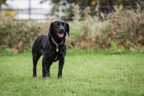Nuovo medicinale veterinario ad azione immunologica Siero Antivipera per cani