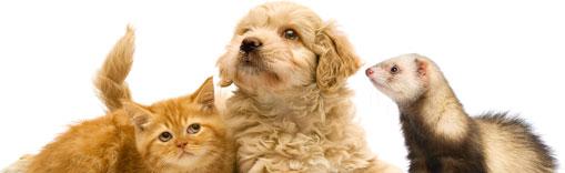 Scambi e importazioni nell'Unione di cani, gatti e furetti, nuove norme in GU 12 Maggio 2015