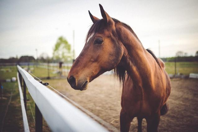Re-immisione in commercio del medicinale veterinario ad azione immunologica indicato per la profilassi vaccinale nei confronti Rinopolmonite equina