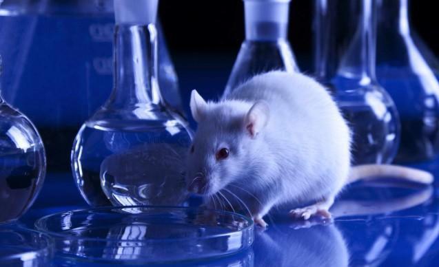 Sperimentazione animale, ecco i dati statistici per il 2014 dell'utilizzo di animali ai fini scientifici